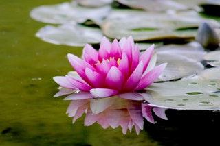 Ötletek kerti tó iszapszívó kiválasztásához